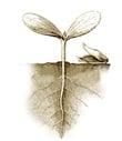mw-plant